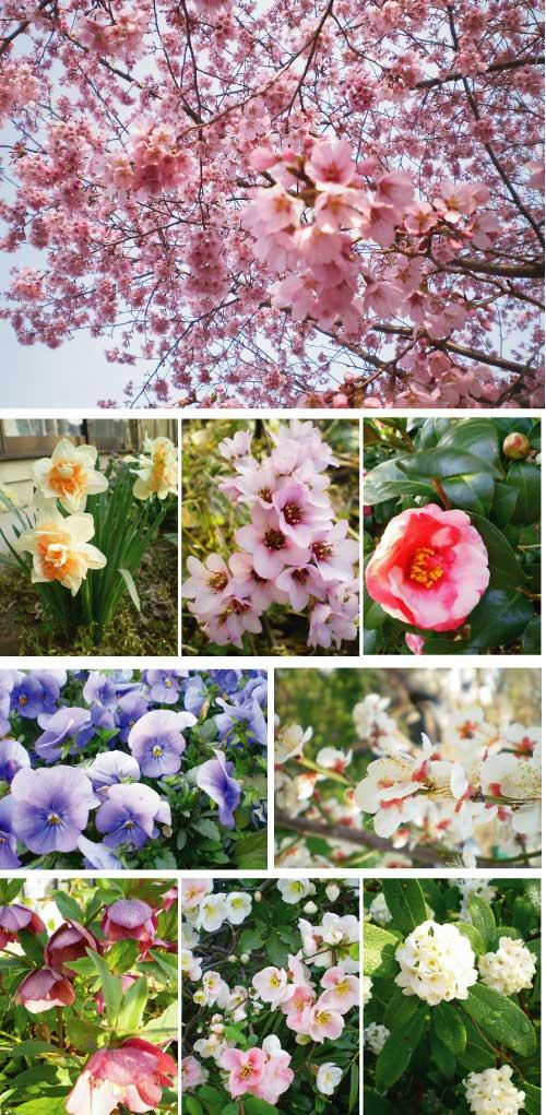 2014年4月花