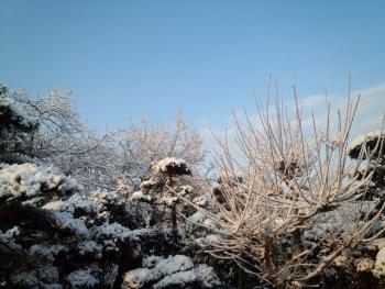 201403073月だけど 雪降りです。4