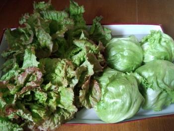20140309野菜