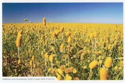 【postcrossing(received)】No.665