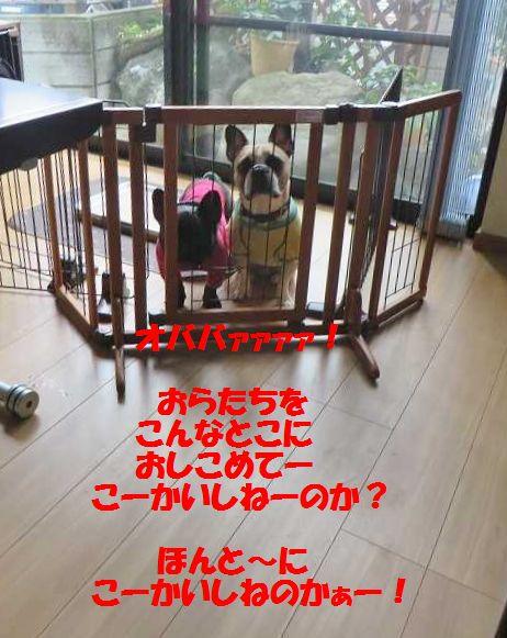 004_20141110090733417.jpg