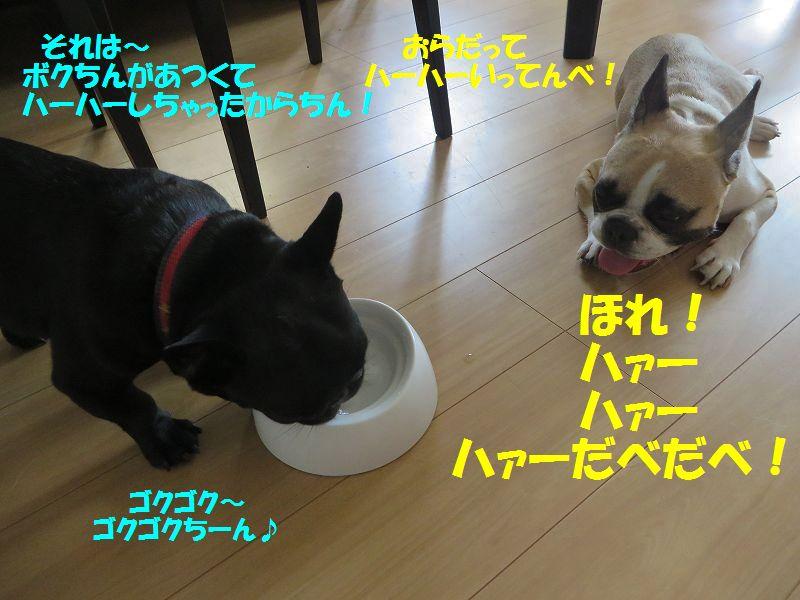 129_20140828141954ac5.jpg