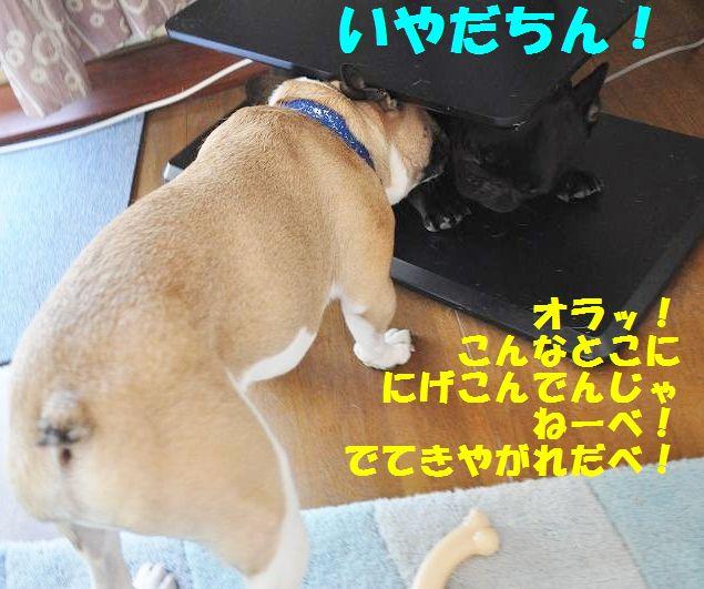 189_20140917110313dad.jpg