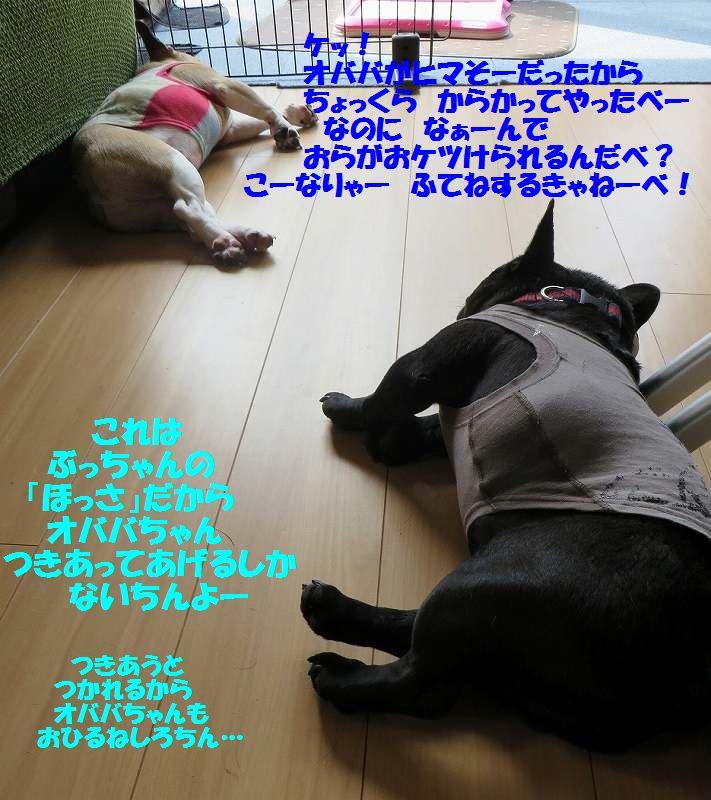 IMG_3134[1]