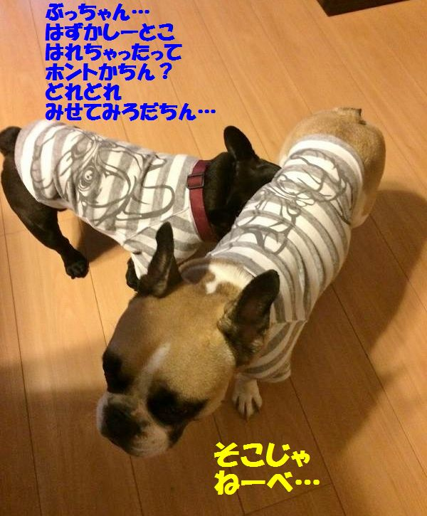 IMG_0173_201410271518361c9.jpg
