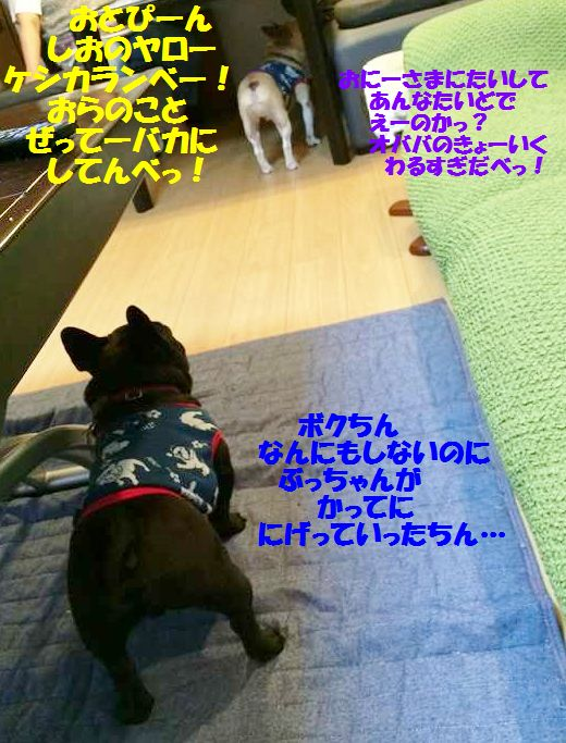 IMG_8720.jpg