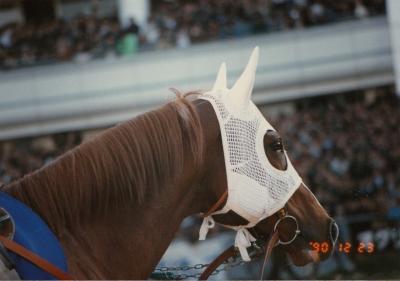 第35回 有馬記念(引退レース)