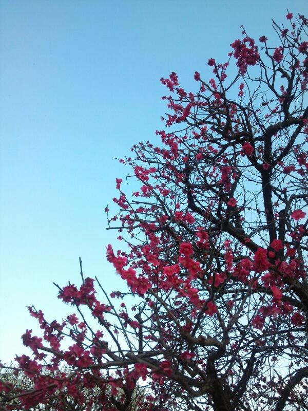 fc2_2014-03-15_21-37-59-163.jpg