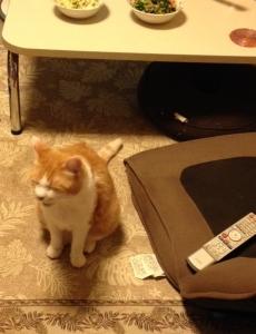 ためいき猫