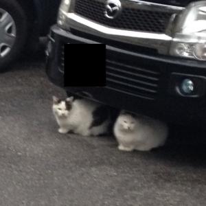 猫タイヤ1