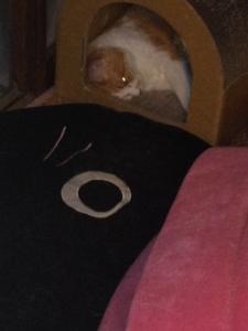 目開けたまま寝てるネコ