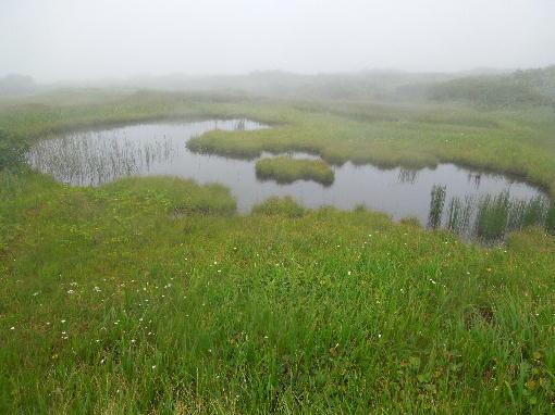 42.池塘2