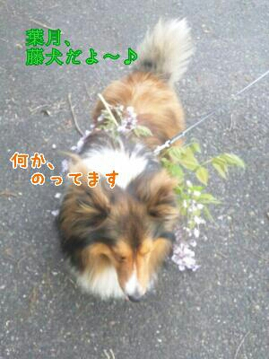 fc2_2014-05-04_19-59-11-280.jpg