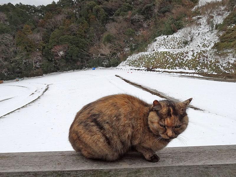 140215花の国雪景色3