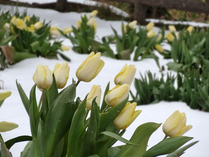 140215花の国雪景色6