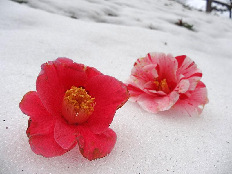 140215花の国雪景色7