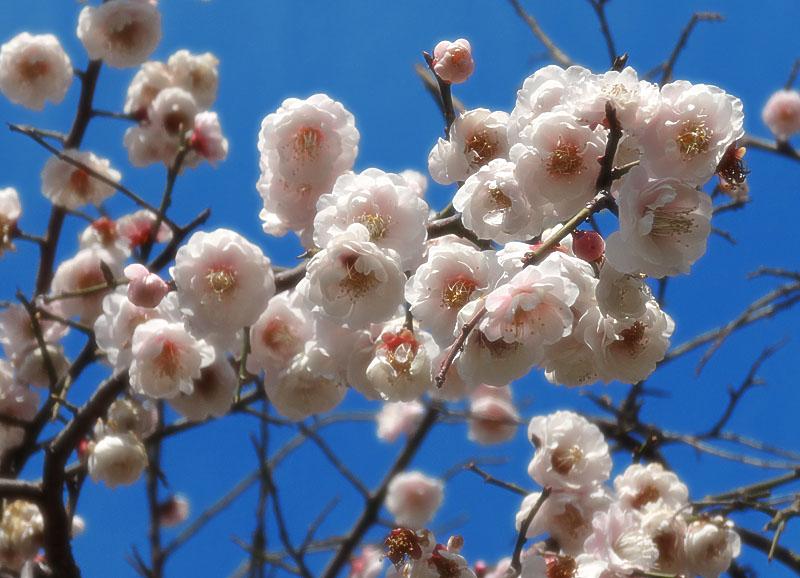 140304今日見た花たち4
