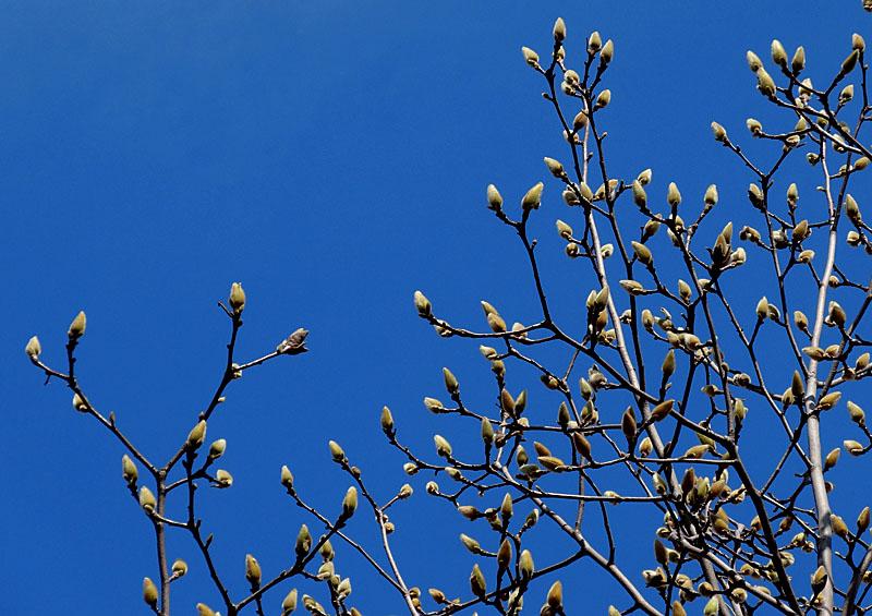 140304今日見た花たち5
