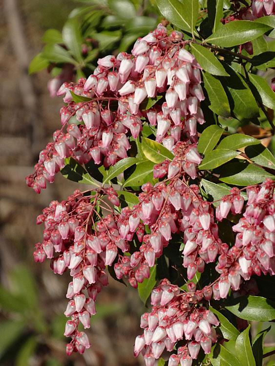 140306春の花たち1