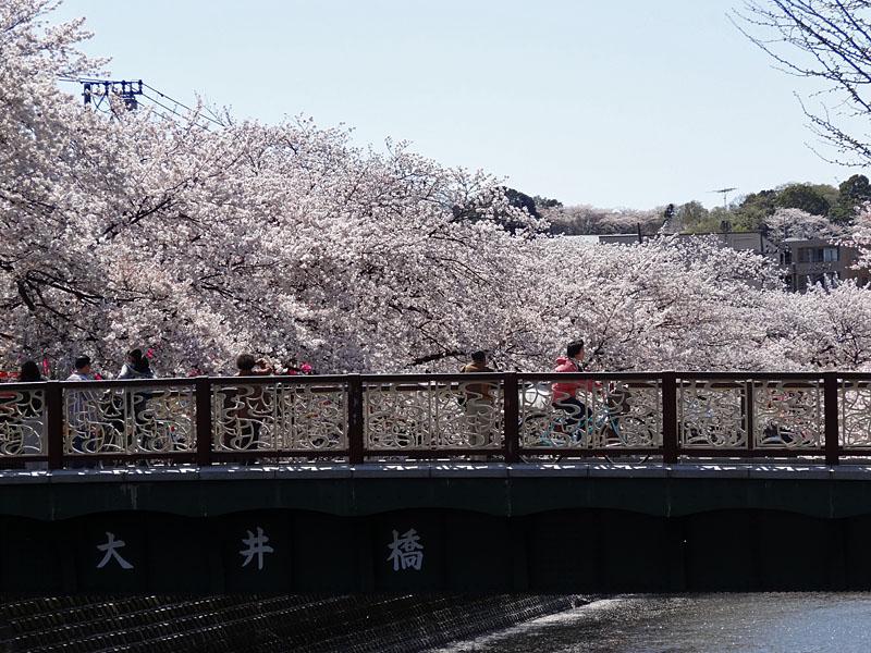 140401大岡川桜並木03