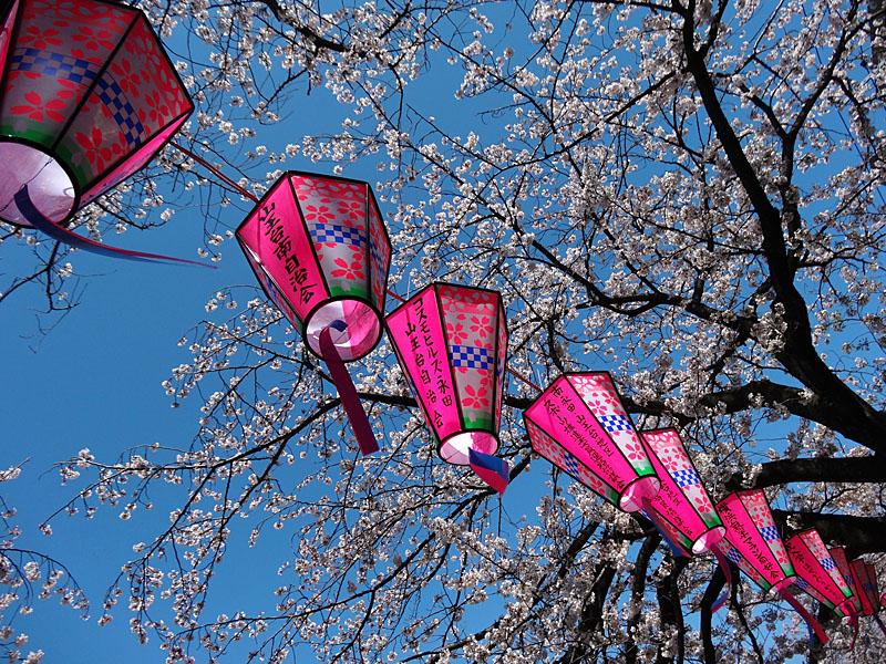 140401大岡川桜並木08