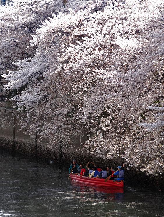 140405桜の大岡川を往く舟たち01