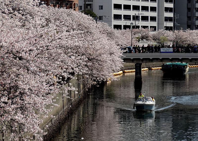 140405桜の大岡川を往く舟たち02