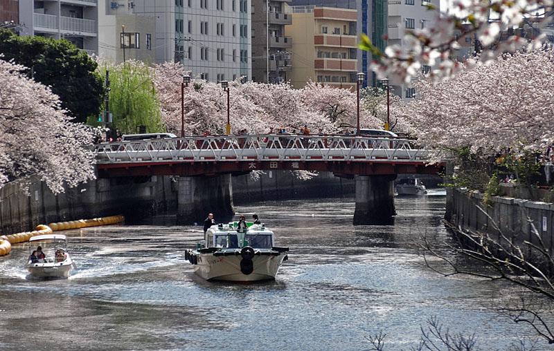 140405桜の大岡川を往く舟たち03