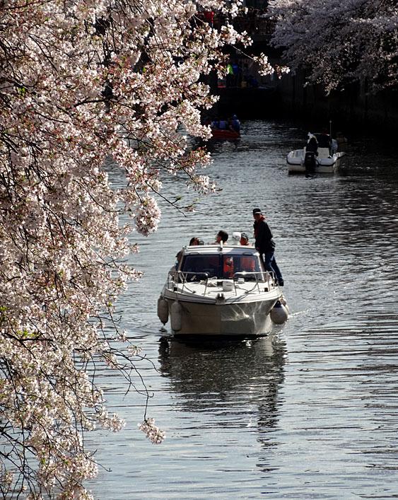 140405桜の大岡川を往く舟たち04