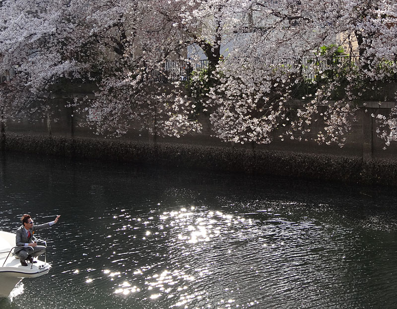 140405桜の大岡川を往く舟たち05