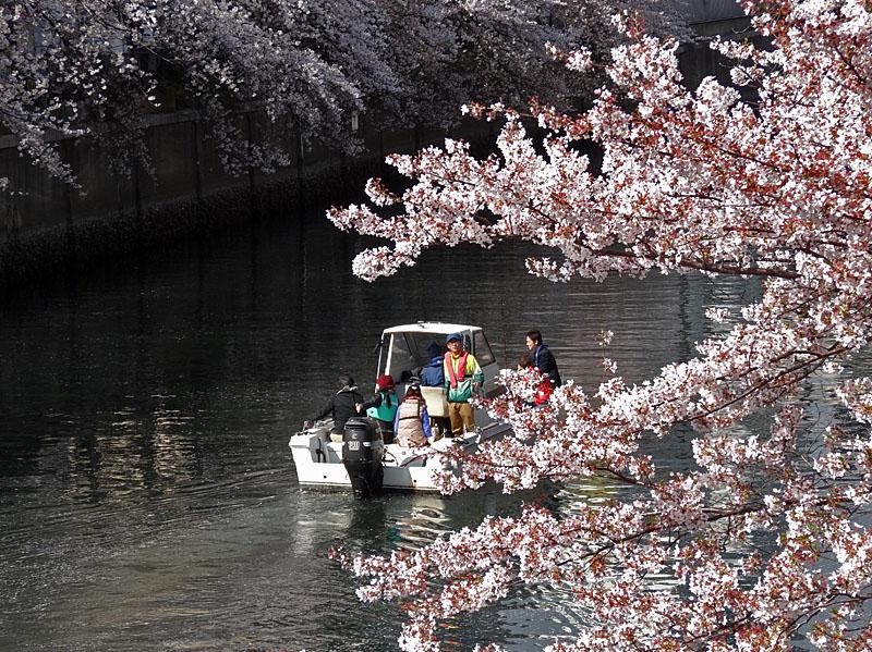 140405桜の大岡川を往く舟たち06