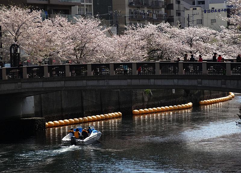 140405桜の大岡川を往く舟たち07