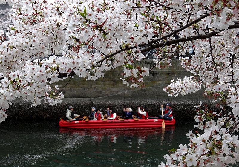 140405桜の大岡川を往く舟たち8,5