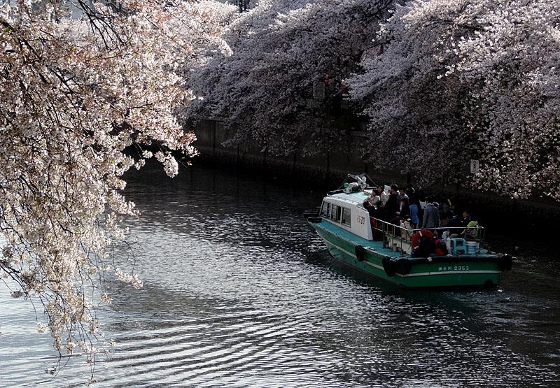 140405桜の大岡川を往く舟たち08