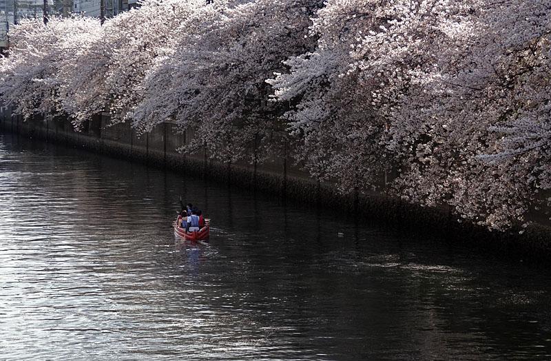 140405桜の大岡川を往く舟たち10+