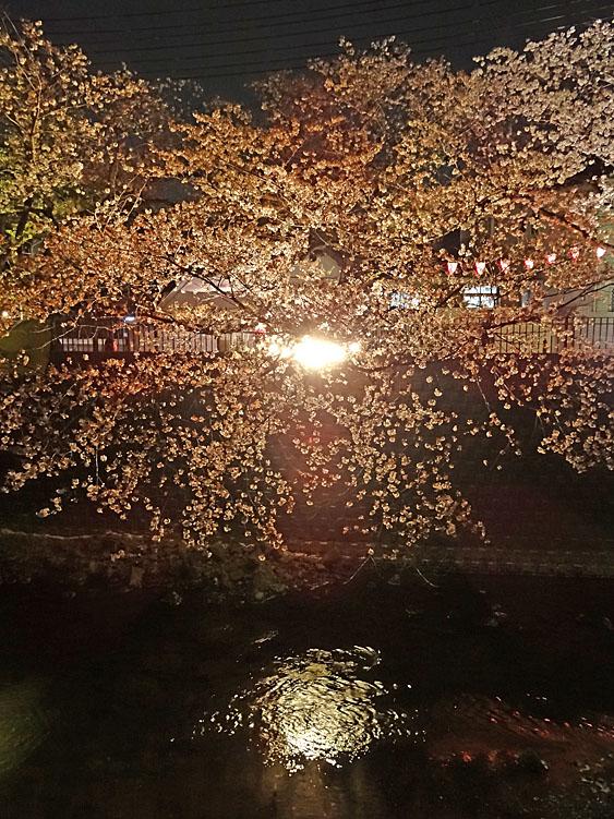 140408夜桜@大岡川5
