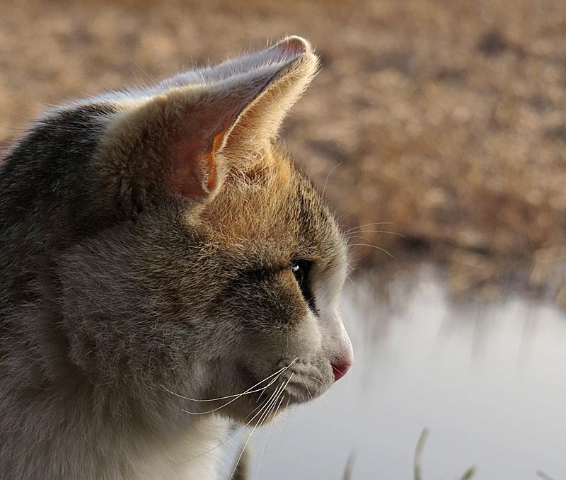 140309小松ヶ池のネコ2