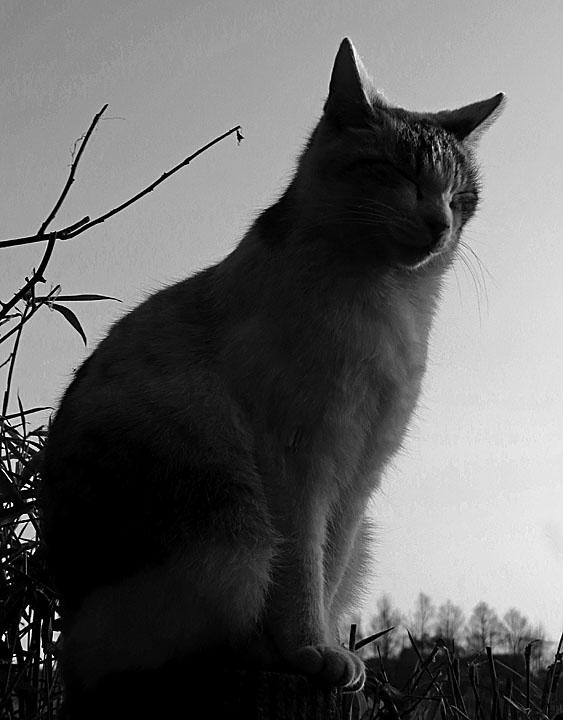 140309小松ヶ池のネコ3