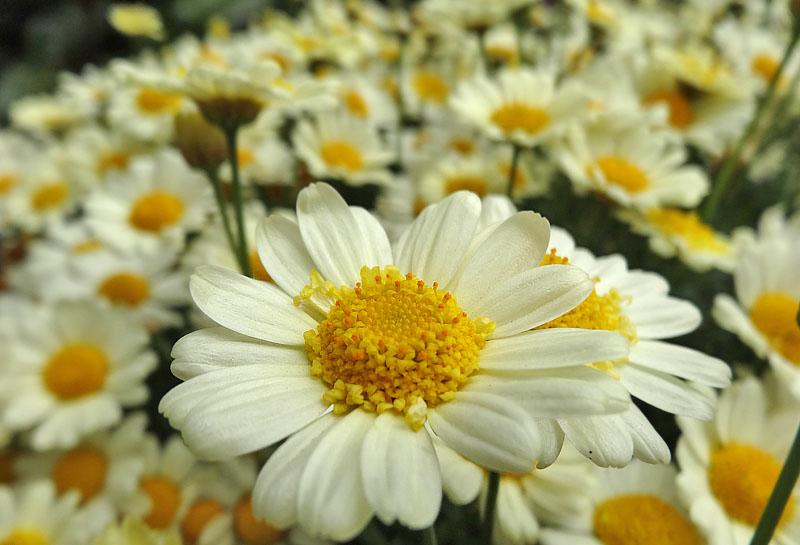 1404百花繚乱の季節3