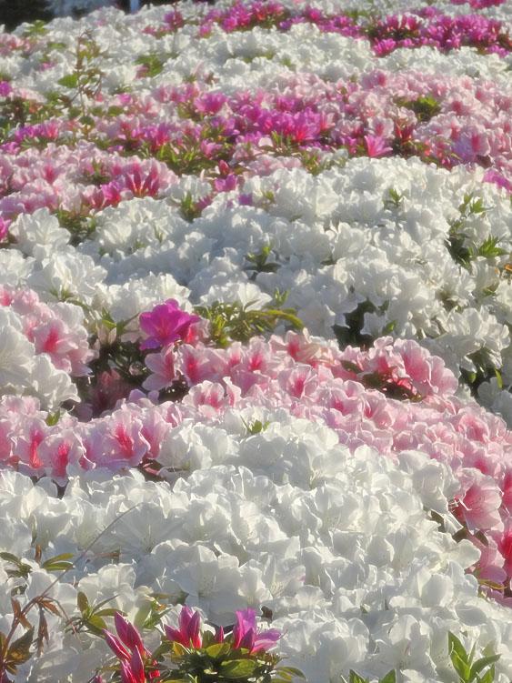 1404百花繚乱の季節2
