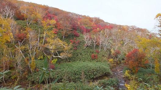 ニセコイオウ川湯滝 (1)
