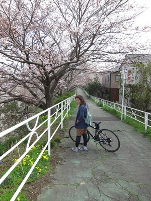 2014_0329桜直前0039