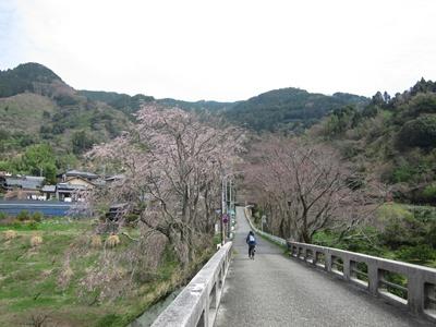 2014_0329桜直前0034