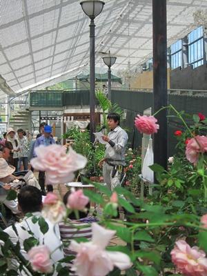 2014_0517薔薇日和0015