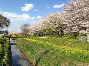 yoshimi2014-1_convert_20140405220131.jpg