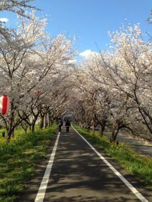 yoshimi2014-5_convert_20140405220356.jpg