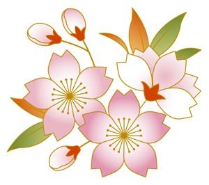 富田、三輪神社の桜祭り