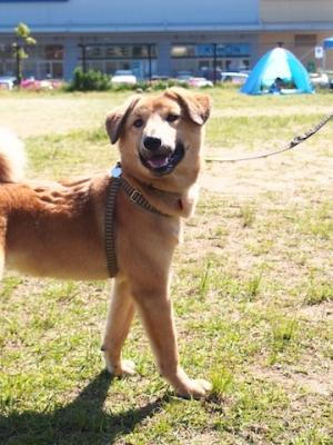 犬1_カンペイ_には