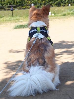 犬7_渋い背中