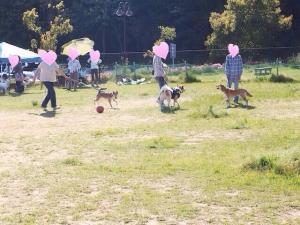 犬楽_ボール楽しい